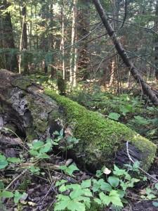 Pretty moss.