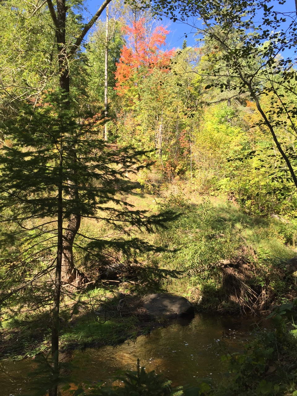 Chester Creek Trail Hike and Fall Fest