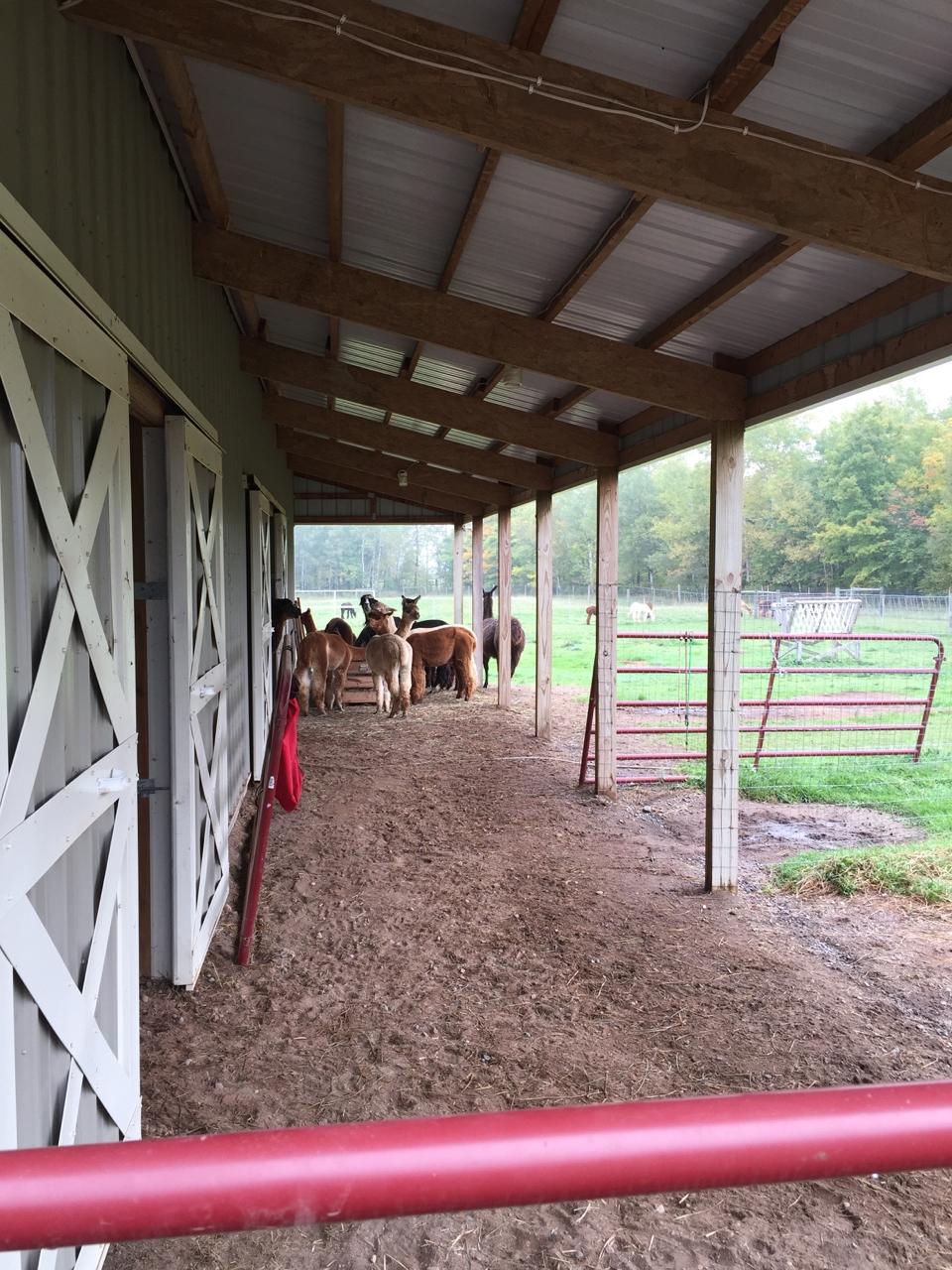 Fiber Tourism: Visit to Frosty Ridge Alpaca Farm